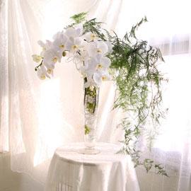 The Elegantflowers - White Phalaenopsis 꽃배달하시려면 이미지를 클릭해주세요