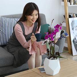 감사의 존경의 선물로 최고선물 서양란 - 핑크호접 만천홍