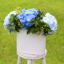 lovely & Romantic - 또 한여름의 수국 꽃배달하시려면 이미지를 클릭해주세요