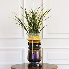 명품 동양란 - 금기 꽃배달하시려면 이미지를 클릭해주세요