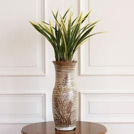 명품동양란 - 태양금 꽃배달하시려면 이미지를 클릭해주세요