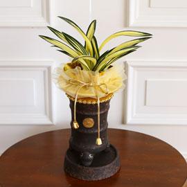 명품동양란 - 달마중투 꽃배달하시려면 이미지를 클릭해주세요