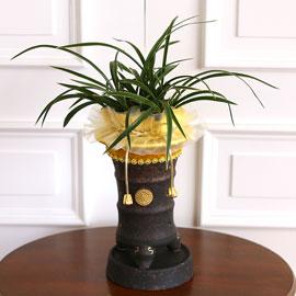 명품 동양란 천초 꽃배달하시려면 이미지를 클릭해주세요