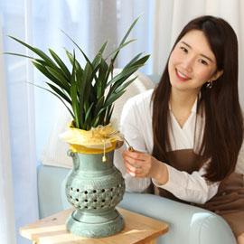 은은한 향기가 좋은 동양란 꽃배달하시려면 이미지를 클릭해주세요