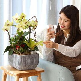 생활공간을 우아하게 - 봄빛 포춘 꽃배달하시려면 이미지를 클릭해주세요