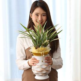 명품동양란 - 황룡관 꽃배달하시려면 이미지를 클릭해주세요