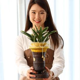명품동양란 달마 꽃배달하시려면 이미지를 클릭해주세요