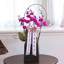 부모님 은혜 감사합니다 - 꽃과 함께 행복하세요 꽃배달하시려면 이미지를 클릭해주세요