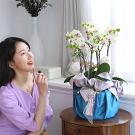 정성이 느껴지는 보자기 포장 - 봄빛 그린베어 꽃배달하시려면 이미지를 클릭해주세요