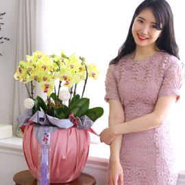 정성이 느껴지는 보자기 포장 - 노랑호접란(대) 꽃배달하시려면 이미지를 클릭해주세요