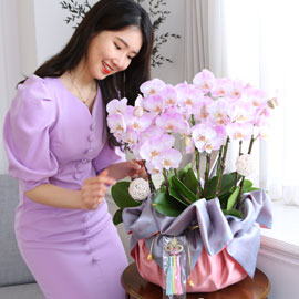 정성이 느껴지는 보자기 포장 - 핑크호접란(대) 꽃배달하시려면 이미지를 클릭해주세요