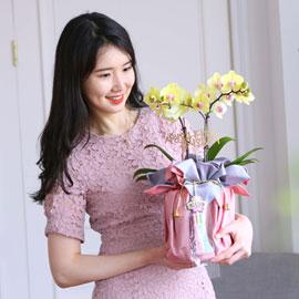 정성이 느껴지는 보자기 포장 - 노랑호접란 꽃배달하시려면 이미지를 클릭해주세요