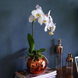 [서울 수도권] Office & Nature - Elegant white 꽃배달하시려면 이미지를 클릭해주세요