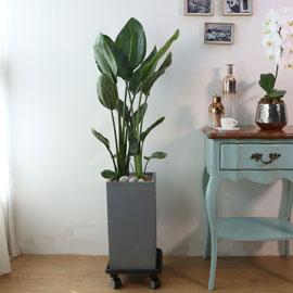 Indoor garden 극락조 꽃배달하시려면 이미지를 클릭해주세요