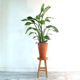 반려식물로 힐링해요 - 여인초 꽃배달하시려면 이미지를 클릭해주세요