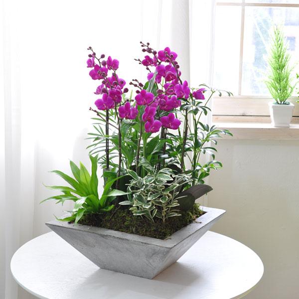 아름다운 꽃 서양란공간을 화사하게 밝혀주는 고급서양란