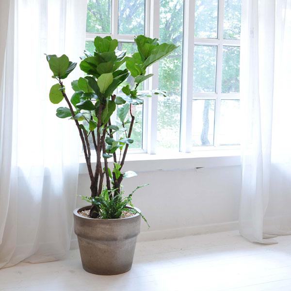 집안의 작은 정원떡갈나무