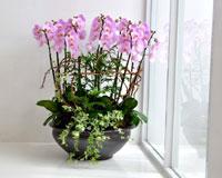 서양란 상품전플라워119의 화려하고 꽃이 예쁜 서양란을 소개합니다