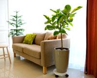 Indoor Garden실내분위기를 멋스럽게 살려주는 예쁜 화분