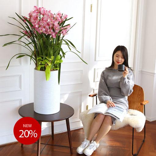 겨울 개업 축하 서양란아름다운 꽃처럼 화려하고 튼튼하게 성공하세요!