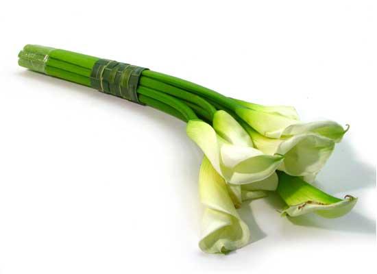 Floristic Basic - Cala(카라의 매력)