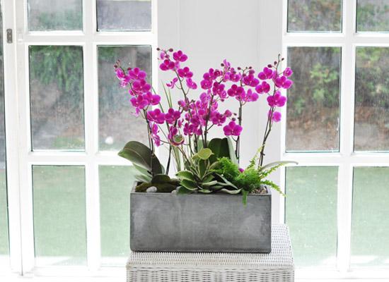 집안의 작은 정원 - 만천홍