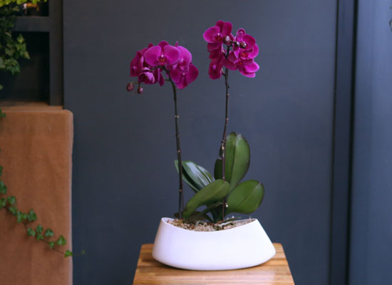 Office & nature Pink orchid **화기변경**