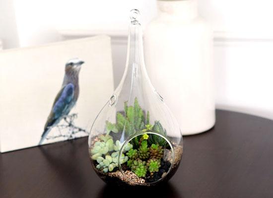 유리병안에 작은 정원을 꾸몄어요 - 물방울