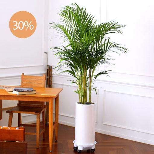 우리집 그린테리어공기정화와 심리적 안정에 큰 도움을주는 식물