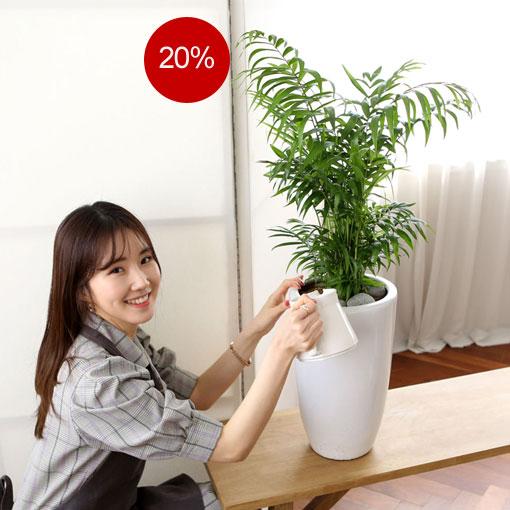 수명도 길고 키우고 좋은 테이블야자음이온이 나오는 실내공기정화식물 베스트