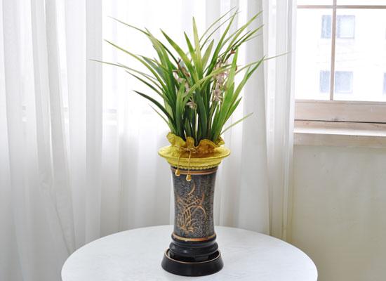 [인사이동 추천] 예쁜 꽃이 피어있는 기품있는 동양란