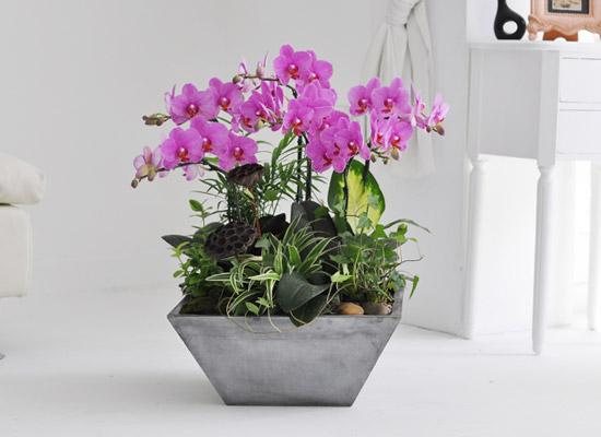 집안의 작은 정원 - 핑크호접란
