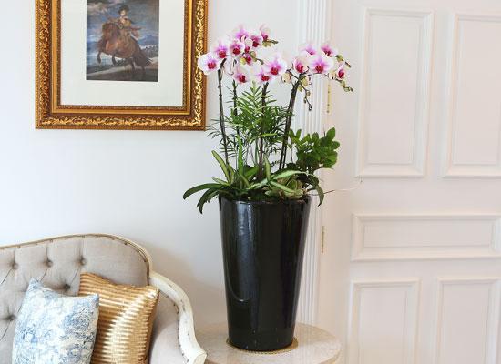 Office&Nature - 하얀꽃의 레드포인트 레드립