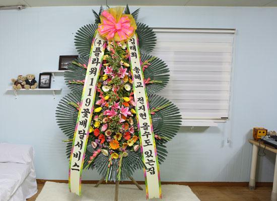 축하화환-김태희 송혜교 전지현 올 수도 있는 집