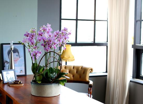 꽃이 아름다운 개업축하선물 서양란 - 공간을 멋스럽게 꾸며주는 화려한 호접란 청풍대