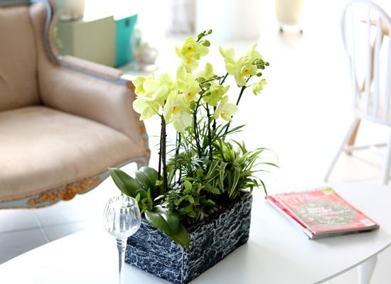 꽃이 아름다운 개업축하선물 서양란 - 고급스러운 호접란 그린애플(화기품절시 변경됩니다)