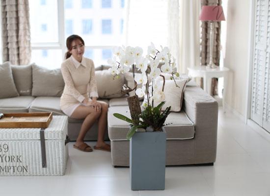 시선을 머물게 하는 실내 식물 - 순백색이 매력적인 화이트호접란