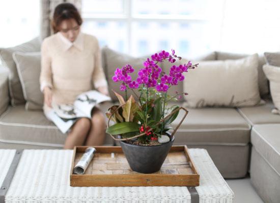시선을 머물게 하는 실내 식물 - 인기가 많고  세련된 만천홍