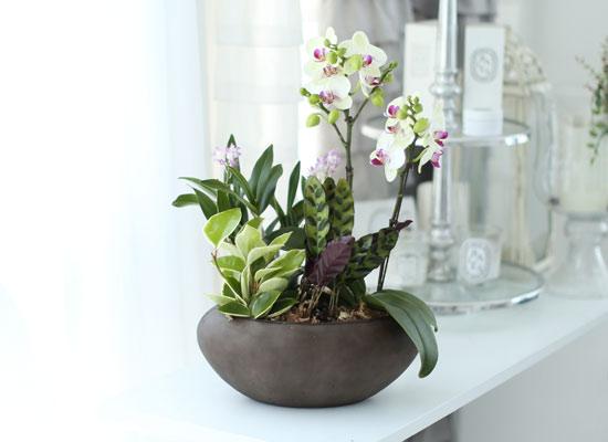 시선을 머물게 하는 실내 식물 - 아름다운 정원 그린베어