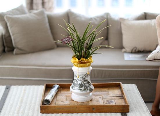 시선을 머물게 하는 실내 식물 - 하얀화기의 고급스런 동양란(황금채홍)