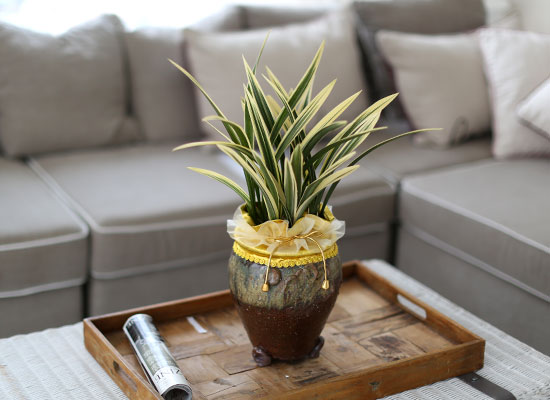 시선을 머물게 하는 실내 식물 - 항아리모양 화기에 담긴 고급동양란(황금일향)