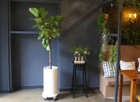 Office & nature 떡갈나무(대)