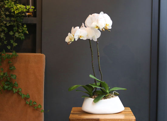 office&nature white orchid **화기변경**