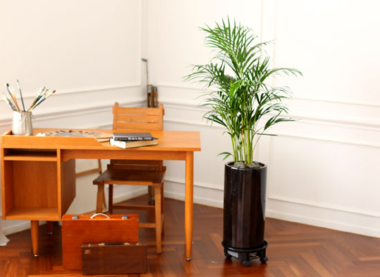 Office & Nature 아레카야자(소) (서울수도권 이외의 지역에서 화분이 변경될 수 있습니다)