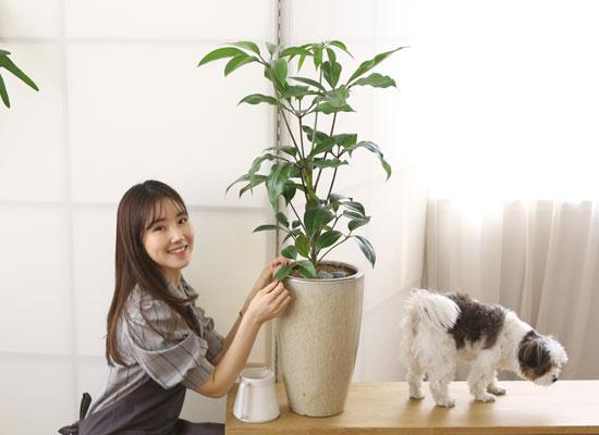 코로나이겨내자 면역력을 길러주는 식물베스트 -대엽홍콩
