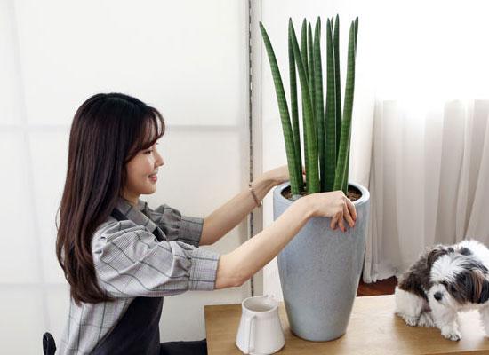 코로나이겨내자 면역력을 길러주는 식물베스트 - 스투키