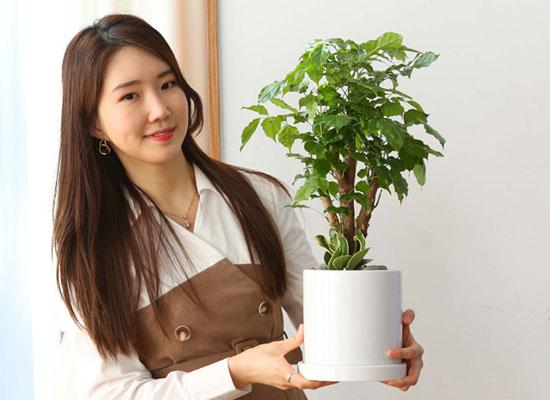 실내에서 키우기 좋고 생명력이 강한 식물 - 녹보수테이블용