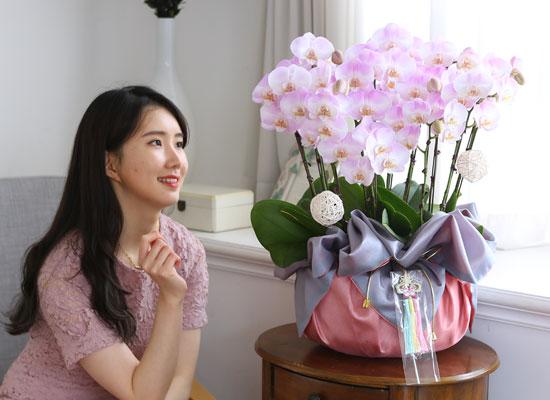 정성이 느껴지는 보자기 포장 - 핑크호접란(대)
